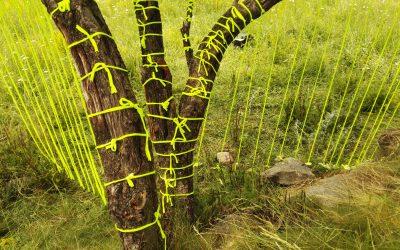 Trabajando y jugando con la naturaleza: Land Art